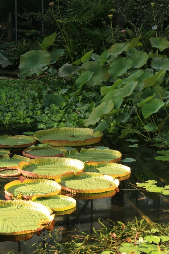 Botanischer Garten, Köln // botanical garden, Cologne