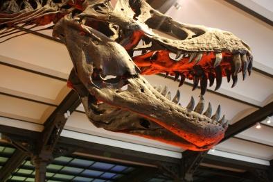 Muséum des sciences naturelles Bruxelles, Brüssel/Brussels