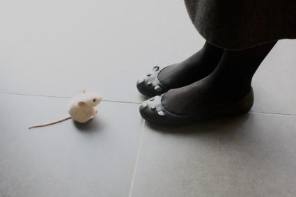 Mäuse // Mice