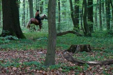 Wald bei Köln // Forest near Cologne